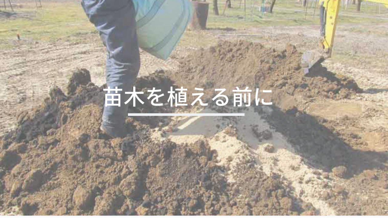 苗木を植える前に
