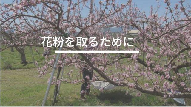 花粉を取るために