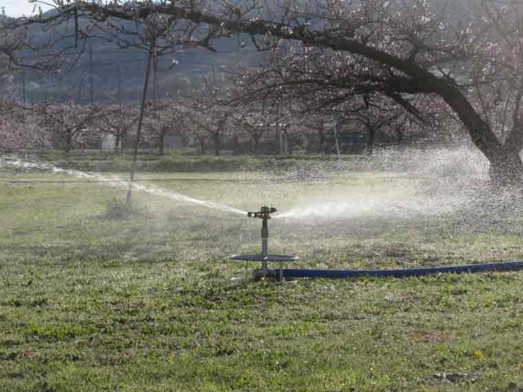 スプリンクラーで桃に灌水