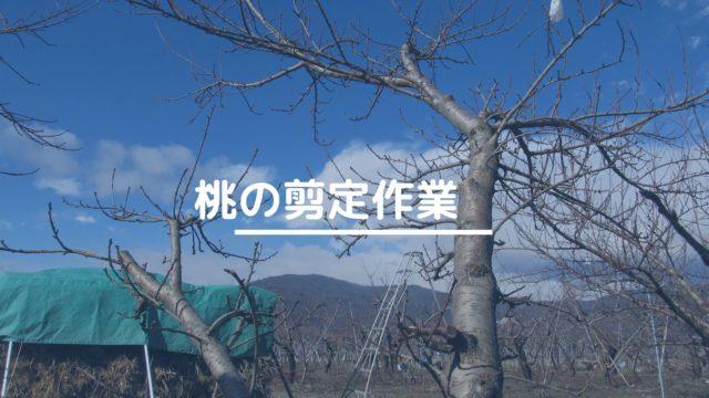 桃の剪定作業